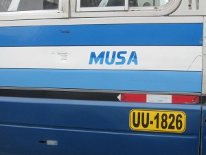 """Musa"""